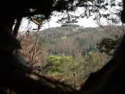 The nest was built six metres high on top of a pine tree. The steep hillside, quietness of the distant valley (Langeac town, Haute-Loire County), crystal clear air and the close distance of the camouflage hide created perfect conditions