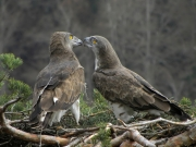 27.03 : the male is touching the female's beak with his one; it looks like a kiss