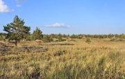 Рис. 2. Место обитания змееяда Circaetus gallicus. Баянаульский национальный парк. 8 сентября 2013. Фото автора