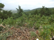 18.07 : sight from the nest