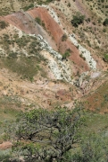 Рис. 3. Гнездо змееяда Circaetus gallicus на фисташке в сухом отщелке
