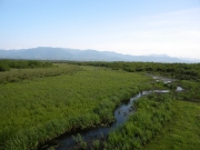 Habitats of Short-toed Eagles during seasonal migrations