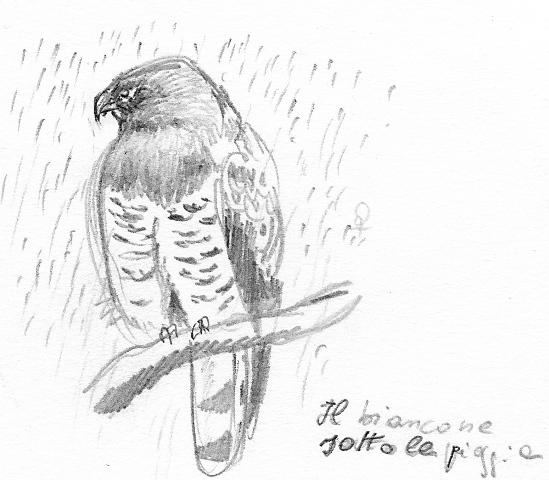 Rainy Nature Drawing Breeding And Survey Season
