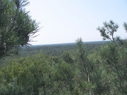 View from the Short-toed Eagle nest