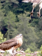 14.07 : the male takes off. His feet are spoiled