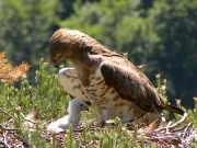 01.06 : she is protecting the chick from the sun