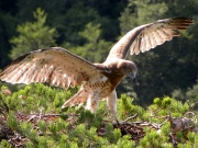 15.07 : it is still very dynamic; it often tries to flap its wings