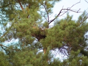 24.08 : and the empty nest already with a lot of the young's down – good sign of the successful breeding