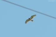 05.06 : in direct flight