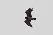 02.04 (4) B: hunting flight over the Desna River's floodplain