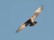 12.05 (2) L11: she gains height and flies away from the nesting site - she needs a little physical exercise