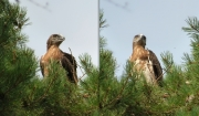 16.07 E16 : postures of a real eagle