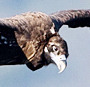 European Raptors: Biology and Conservation