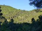 Breeding site Dur05, in the Mediterranean forest of Aleppo pines